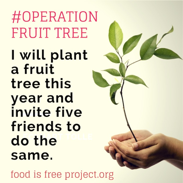 operation-fruit-tree