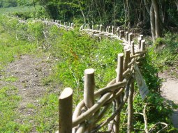 Hedge laying hazel top