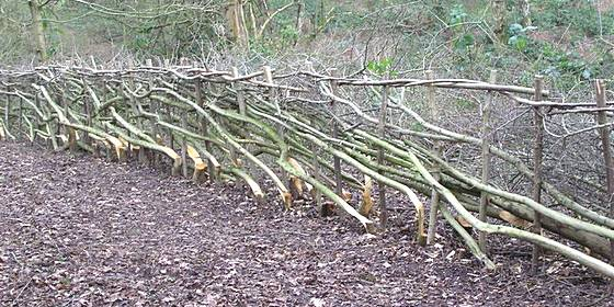Hedge laying pleacher example