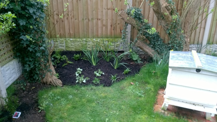 Shade border freshly planted in Cotgrave