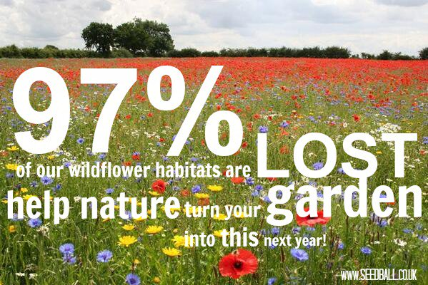 Wildflower habitats have declined 97%! #savethebees