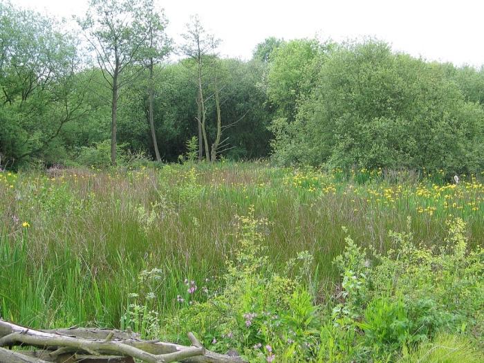 Beeston Marsh, Attenborough Nature Reserve