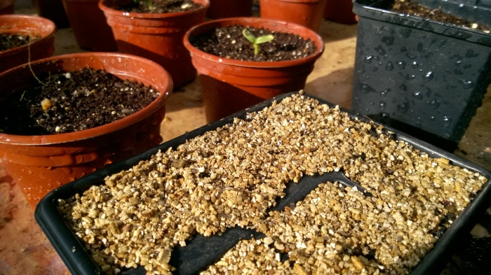 Seeds in the green house march 2017