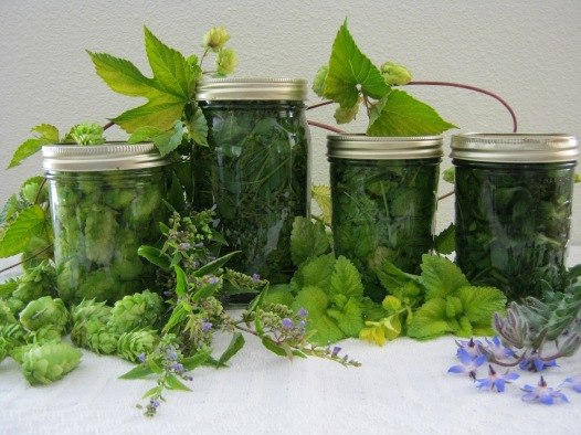 GreenCottageCreek-borage-tincture-01