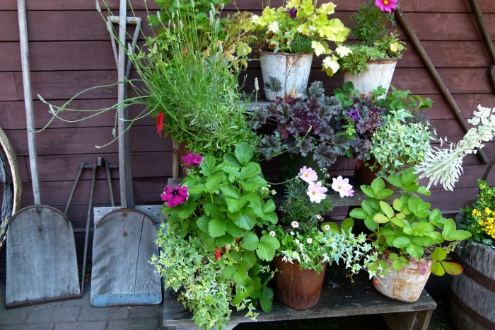 Random pots for a mini container garden