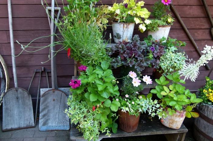 Random pots for a mini container garden