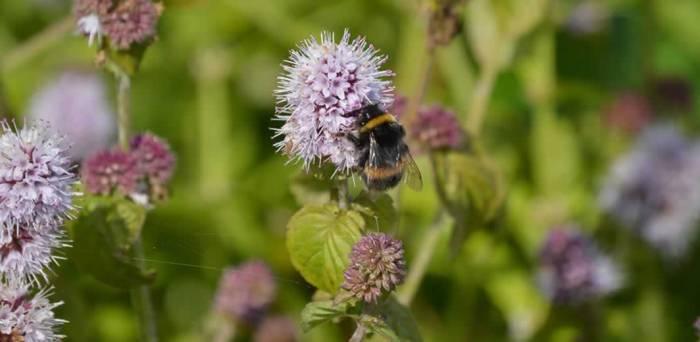 m-aquatica-bumblebee-01