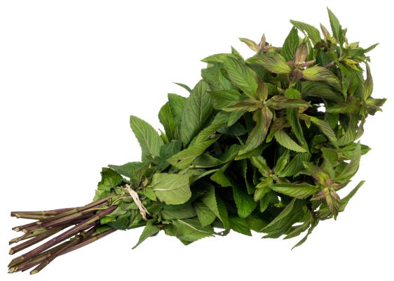 mentha-edible-herbal-01