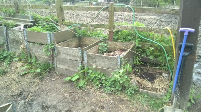 Old compost bins overrun with nettles from when the sanctuary first started up are going to be replaced with a new border to help increase bio-diversity, soil stability and soak excess water over winter.