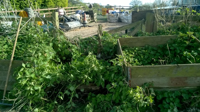 Compost bins overrun with nettles hide a broken down gate, so its time to clear the area fix up the fence and make a new gate all from reclaimed wooden pallets!