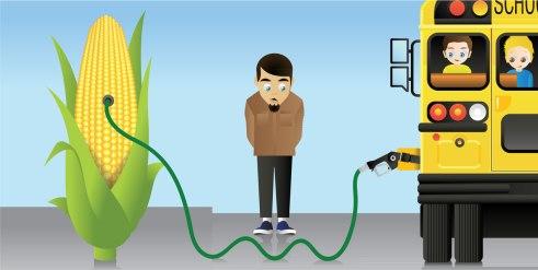 Plants as biofuel