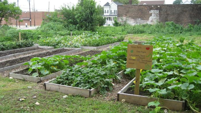 Comella community garden, Cleveland