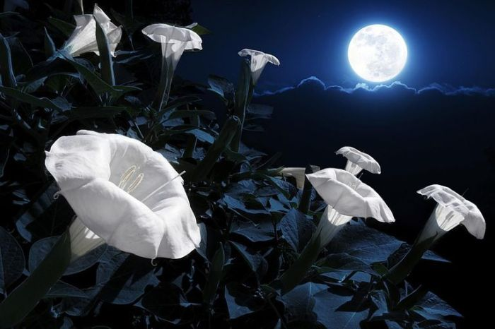 Moon Garden [Image by Ricardo Reitmeyer E Getty Images]