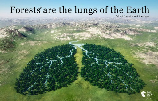 Forests & algae are the lungs of the Earth