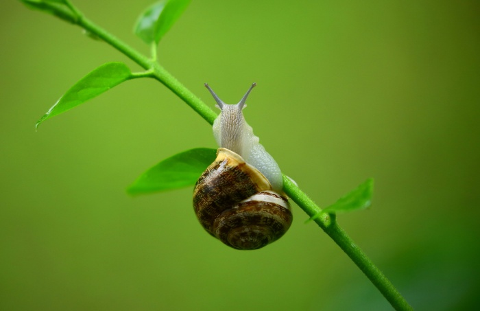 Snail climbing a plant