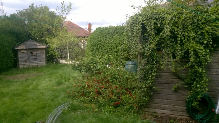 Dawn's garden before her Wildlife makeover