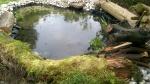 Dawns finished wildlife pond