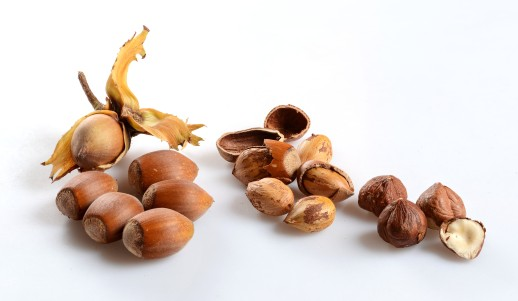 Corylus avellana produce nutritious fruits known as hazelnuts