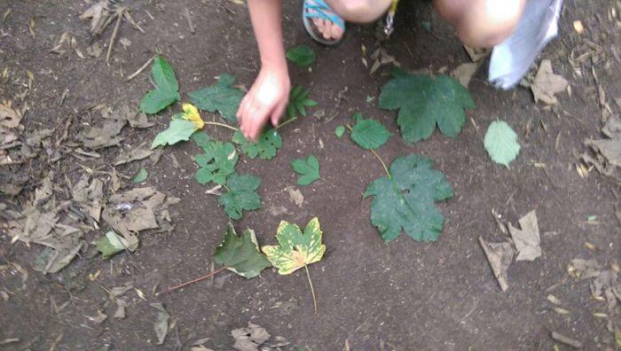 Leaf identification game (Eco club forest walk, July 2017)